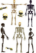 Isolated human skeletons collection — Stock Vector