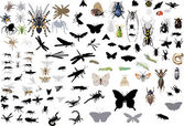 Large set of isolated insects and spiders — Stock Vector