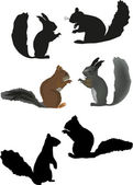 Six isolated squirrels — Vector de stock