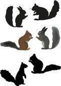Sześć wiewiórki na białym tle — Wektor stockowy