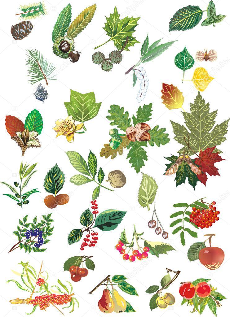 Früchte Von Bäumen