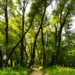 Forest way — Stock Photo