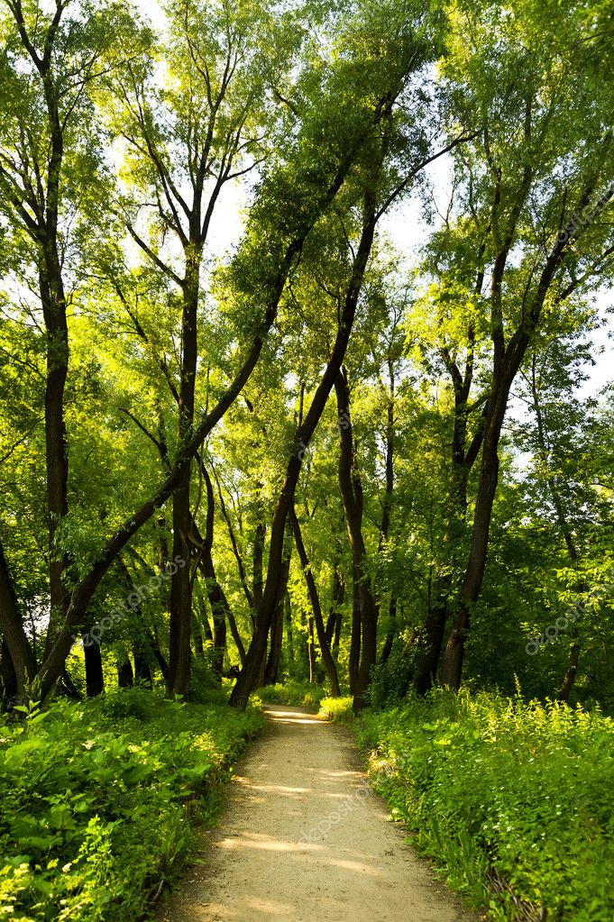 Forest way in light with medow  Stock Photo #11466711