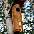 Bird feeder — Stock Photo #11078024