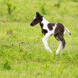 Horse foal — Stock Photo #11250783
