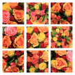 Multicolored rose collage — Stock Photo
