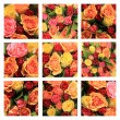 Multicolored rose collage - Foto Stock