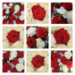 Red and white rose collage — Stock Photo