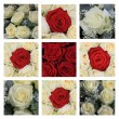 Red and white rose collage - Foto Stock