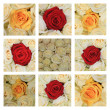 Pink rose collage - Foto Stock