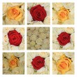 Pink rose collage - Foto de Stock  