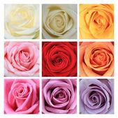 Nine roses collage — Stock Photo