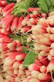 Fresh radish — Stock Photo