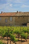 Vineyard in Provence — Stock Photo