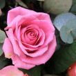 Stock Photo: Pink rose close up