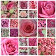 Stock Photo: Pink rose high resolution collage