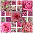 Pink rose high resolution collage — Stock Photo #11757391
