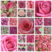 Pink rose high resolution collage — Stock Photo