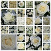 Bílá růže koláž — Stock fotografie