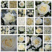 White rose collage — Stockfoto