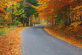 Road in colorful forest — Stock Photo