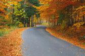 Strada nella foresta colorata — Foto Stock