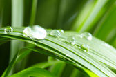 Water drops on the green grass — Photo