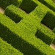 Geometric pattern of green hedge flowerbed — Stock Photo #12063801