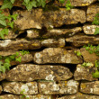 Stone wall and green plants — Stock Photo #12065137
