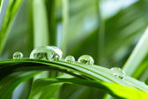 Water drops on the green grass — Stock Photo