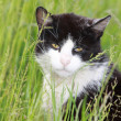 White black cat on meadow — Stock Photo #11391353