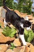Black cat walking on rocks — Stockfoto