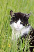 White black cat on meadow — Stock Photo