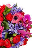 Flowers isolated on white background — Stockfoto