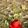 Two red cups on a grass — Stockfoto