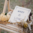 Harvested pumpkins decorate — Foto Stock