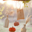 Harvested pumpkins decorate - Foto Stock