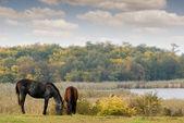 Horses on pasture autumn scene — Stock Photo