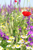 Colorful wild flowers — Stockfoto