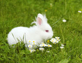 White bunny — Stockfoto
