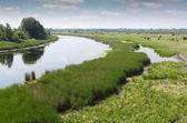 Paysage d'été de rivière — Photo