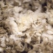 Stock Photo: Merino Wool