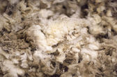 Merino Wool — Stock Photo