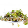 Radish sprouts on a spoon isolated on white background — 图库照片