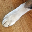 Dogs Paw - Stock Photo