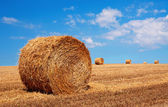 Bales of wheat in summer time — Stock Photo