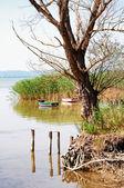 Paisaje del lago balaton, hungría — Foto de Stock