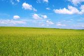 Buğday-alan bahar güneşli — Stok fotoğraf