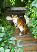 Cats on the steps — Stock Photo