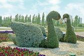 Kuğu belediye parkı — Stok fotoğraf